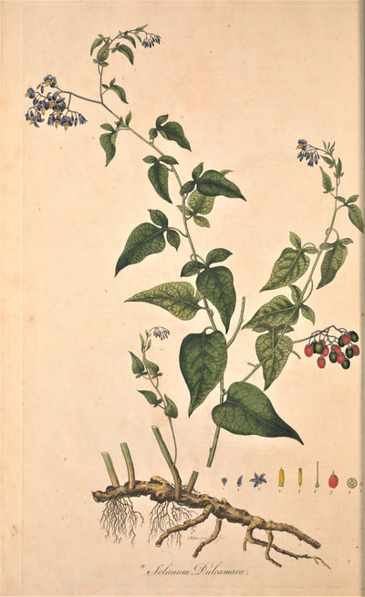 William Curtis, Flora Londinensis, v5 1777-1798